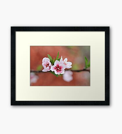 Peach Tree Petals Framed Print