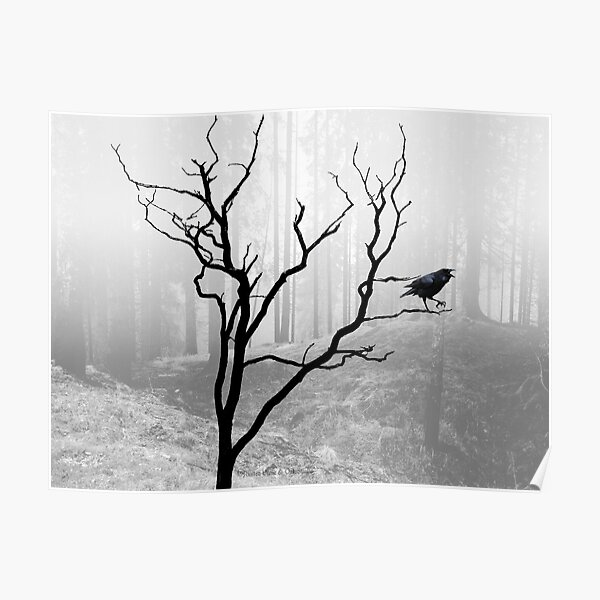Black Crow in Foggy Forest A118 Poster