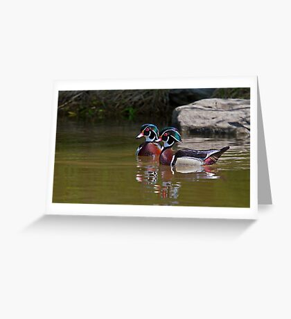 Wood Duck Buds Greeting Card