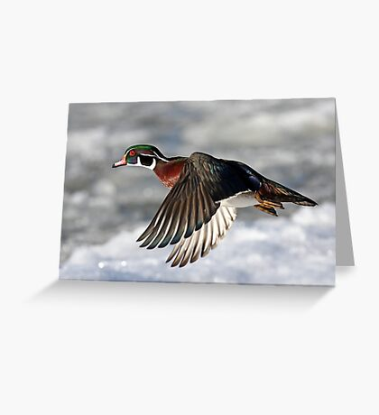 Cat's Eye - Wood Duck Greeting Card