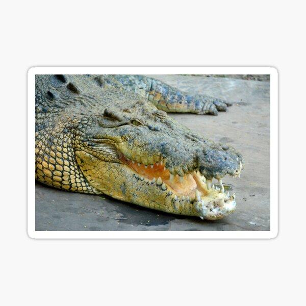 Saltwater crocodile Sticker
