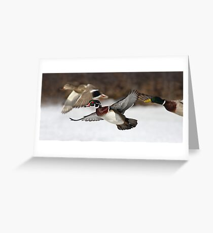 Flying the friendly skies - Wood Duck Greeting Card