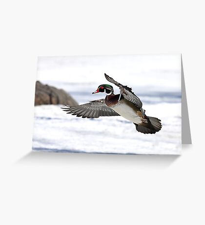 By the frozen shoreline - Wood Duck Greeting Card