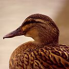Female Mallard by Trevor Kersley
