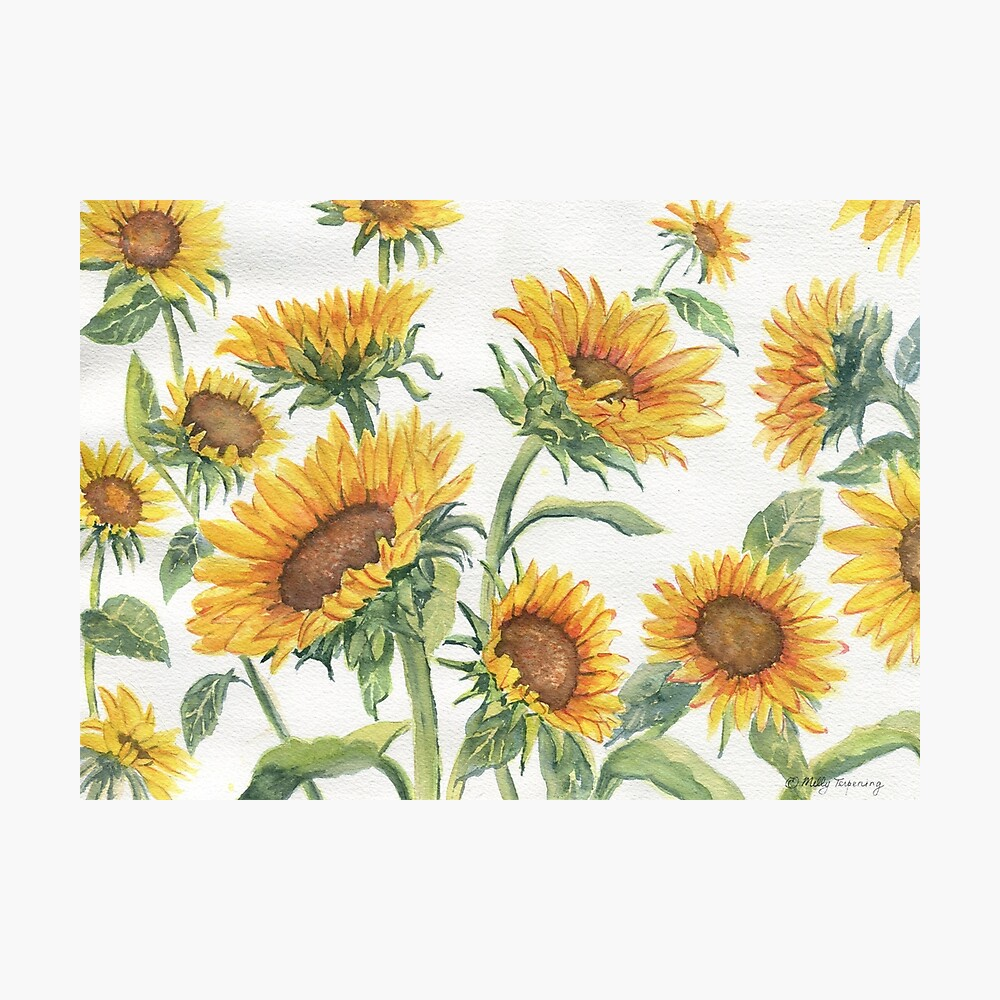 Blooming Sunflowers Photographic Print
