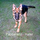 Papparazzi  Hater by Alexander Mcrobbie-Munro