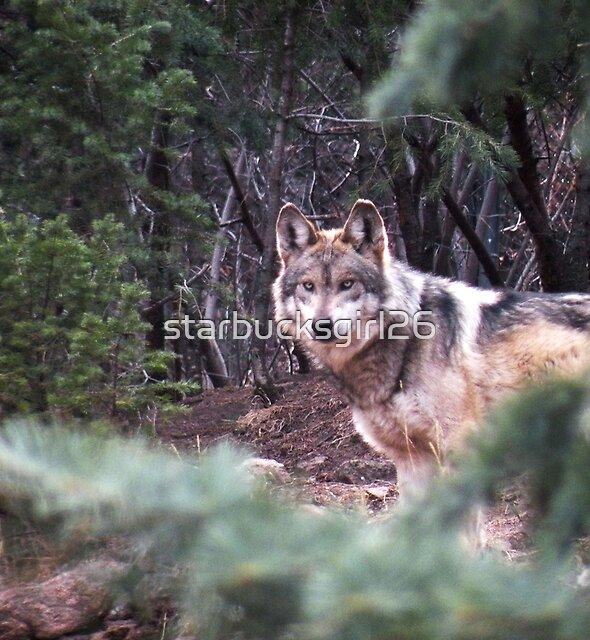 Mexican Gray Wolf by starbucksgirl26