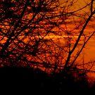 Sunset dreams by solareclips~Julie  Alexander