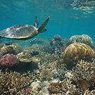 Coral reef sea turtle underwater Pacific ocean by Dam - www.seaphotoart.com