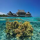 Bungalows overwater with corals underwater Pacific by Dam - www.seaphotoart.com