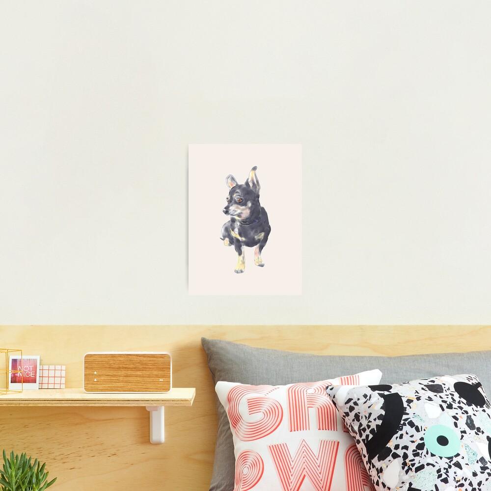 Little Dog Waiting Photographic Print