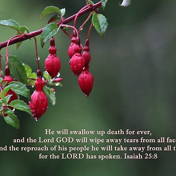 Fuschia Tears Isaiah 25:8 by hummingbirds
