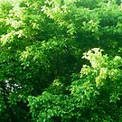 The Green Leaves of Summer by Vivian Eagleson