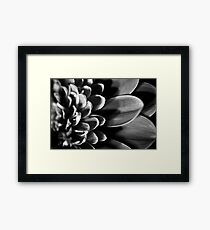 B/W MacroFlower One Framed Print