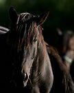 Dark Horse by Todd Weeks
