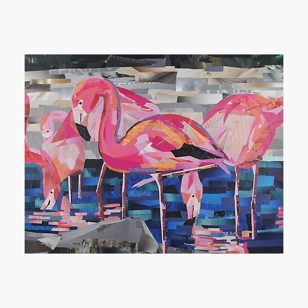 Flamingo Dancers Photographic Print