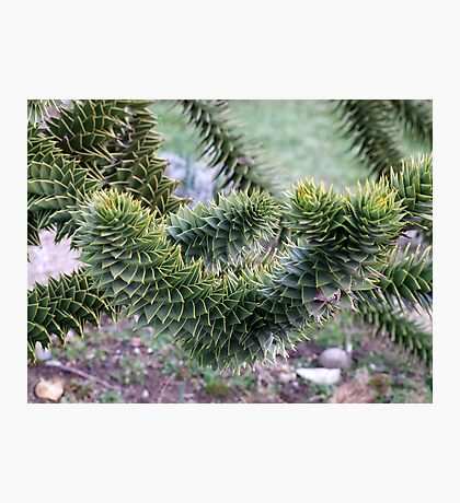 Spikey Leaves Photographic Print