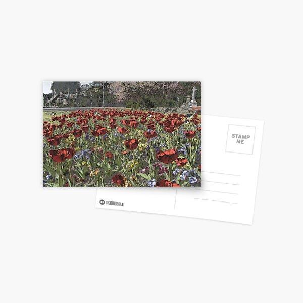 Chrome  Tulips Postcard
