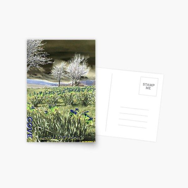 Digital daffodils Postcard