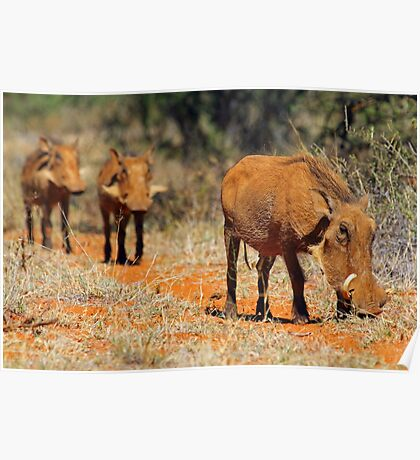 Warthog family Poster