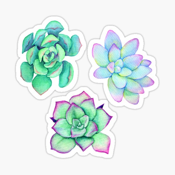 Bright Watercolor Succulent Plant Pattern Sticker