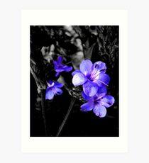 Purple selections Art Print