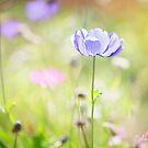 Poppy Season by Melissa Dickson