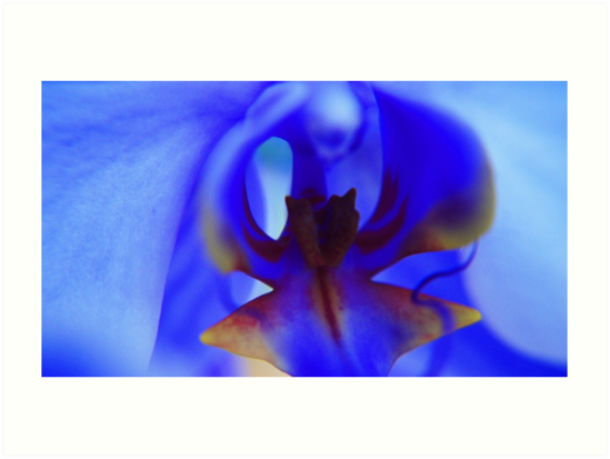 Blue Orchid by dotstarstudios