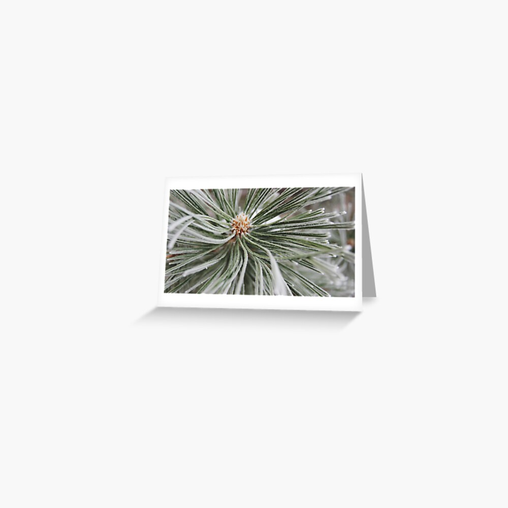 Frosted Pine Greeting Card