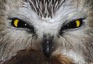 Saw-whet Owl...Saw-eeet! by Jim Cumming