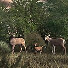 Family of Deer by Walter Colvin