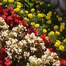 Rainbow of color by cetstreasures