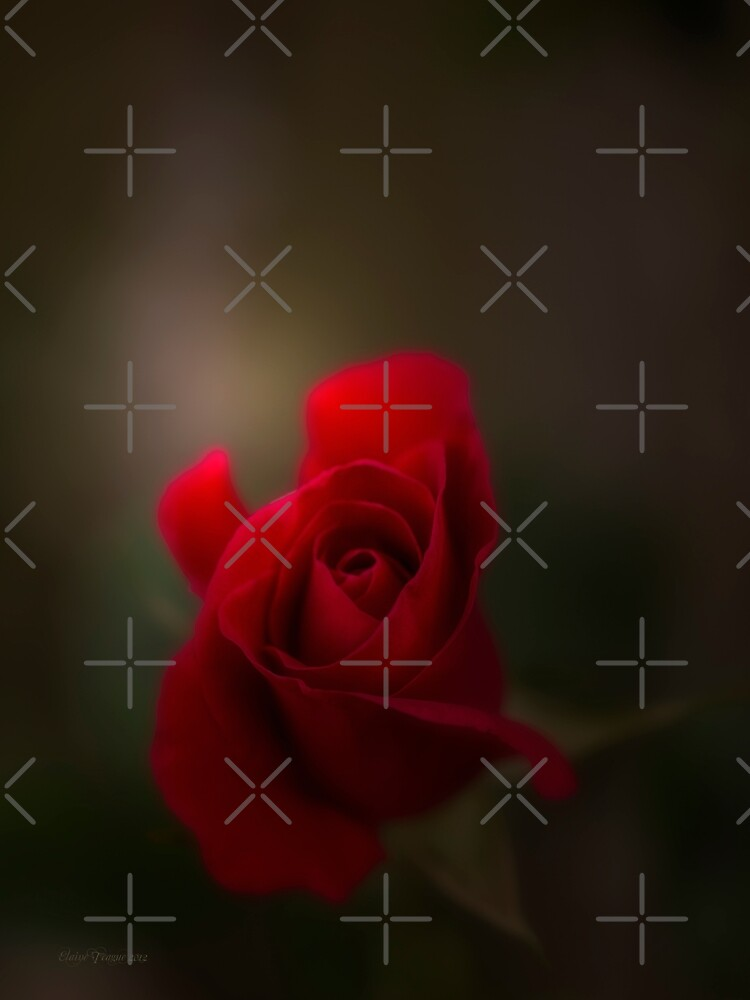 Rose Red by Elaine Teague