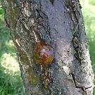 Tree Sap by cetstreasures