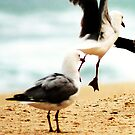 seagull leap frog by oddoutlet
