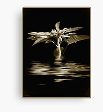 Poinsettia Reflections in Sepia Canvas Print