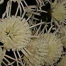 Beautiful Blooms by cetstreasures