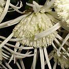 Beautiful Bloom2 by cetstreasures
