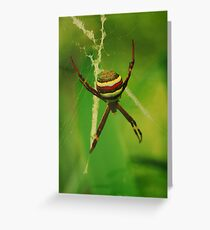St. Andrews Cross Spider Greeting Card