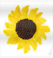 Fluffy Sunflower Poster
