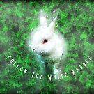 Follow The White Rabbit by Mark Salmon