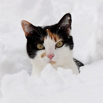 Victoria - I Thought You Said That the Snow Was Melting! by ZipaC