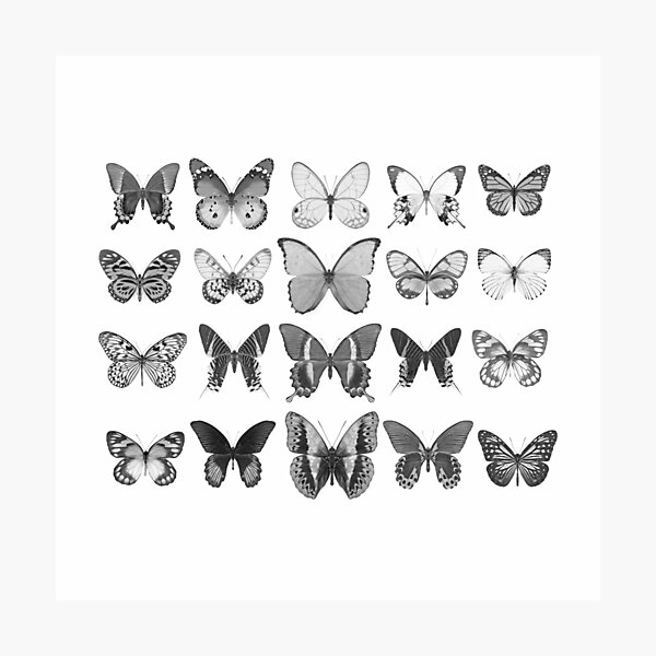 Mono Butterfly Collection Photographic Print