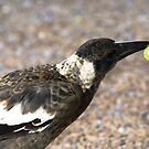 A bird with a Grape by Neater