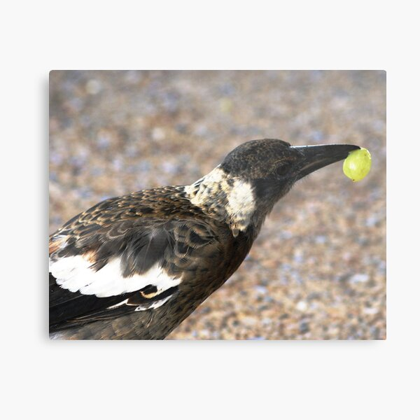 A bird with a Grape Metal Print