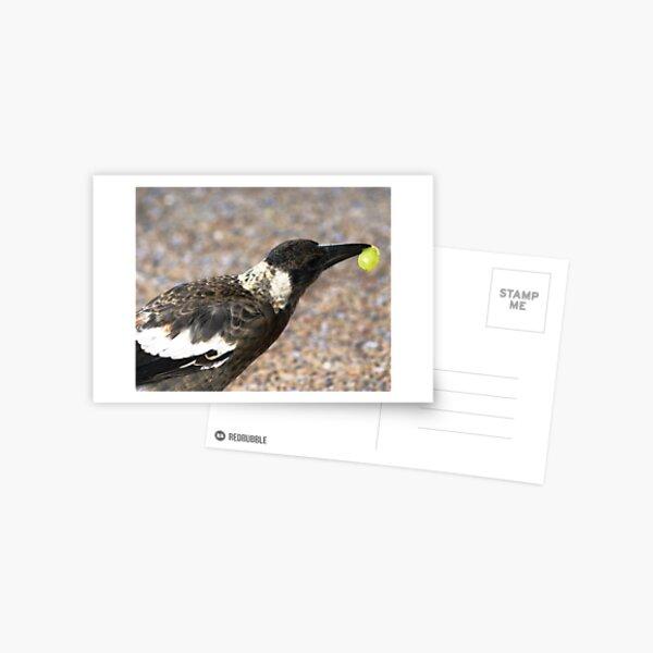 A bird with a Grape Postcard