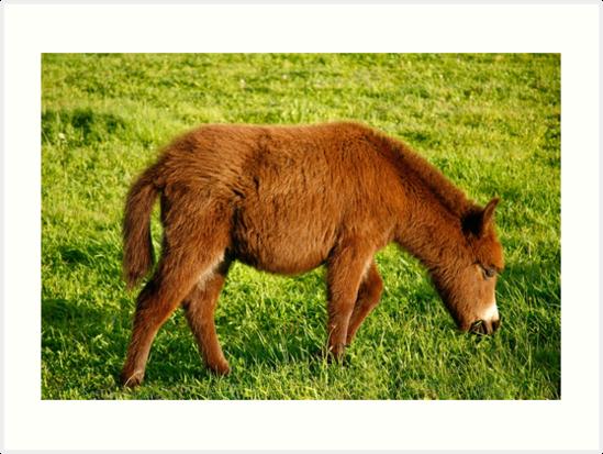 Baby donkey grazing by Gaspar Avila