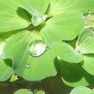 droplets by djTrickyOne