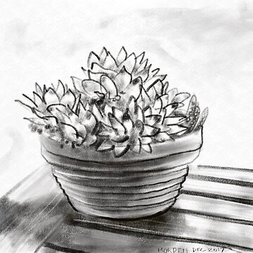Potted succulent  by morden