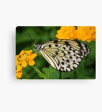 Paper Kite Butterfly with Folded Wings on Yellow Lantana Canvas Print